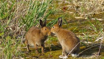 ウサギ13.jpg