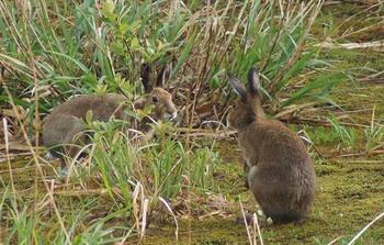 ウサギ4.jpg